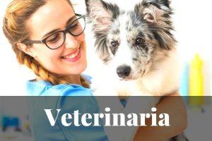Los Mejores Máster en Veterinaria